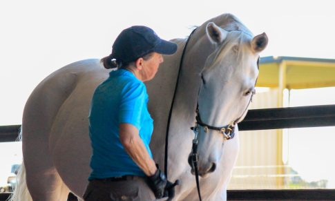 Working with 'Energy' and your Horse